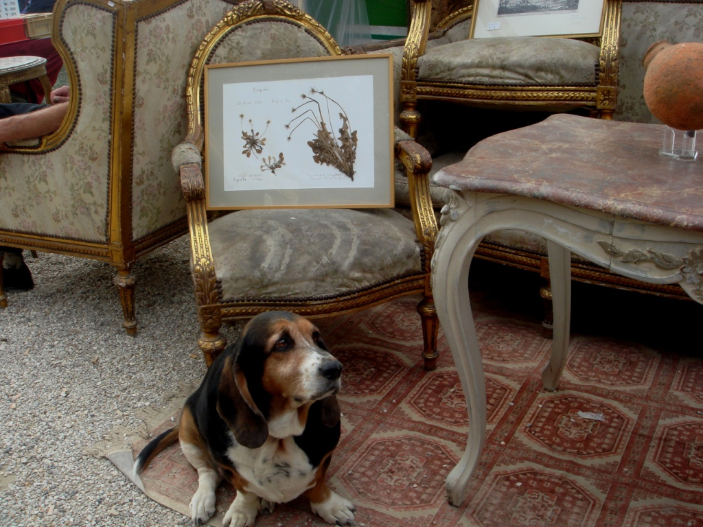 can dog fleas live in sofas harveys 3 seater leather recliner sofa painting ilovecuriosity