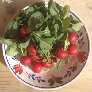 Detox recept met radijsjes? Denk eens aan een detox salade of deze detox ontbijt sap met maar 3 ingrediënten wortel radijs en tomaat. Ideaal voor sapcentrifuge of slowjuicer. Meer info bij detoxcoach Nico van Rossum
