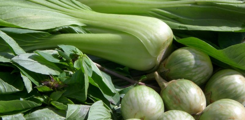 Seizoensgroenten van juni. Welke verse groenten kan je gebruiken voor heerlijke detox recepten in een detox kuur thuis met professionele begeleiding?
