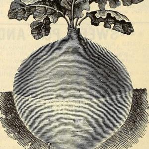 Groentefriet van koolraap pastinaak wortel knolselderij pompoen. Voedzaam en lekker in een detox kuur thuis!