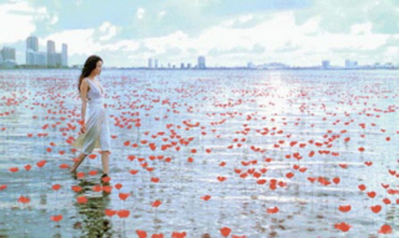 Flying poppies_living in the water  I Love Green Inspiration