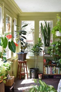 Decorating With House Plants - I Love Green Inspiration
