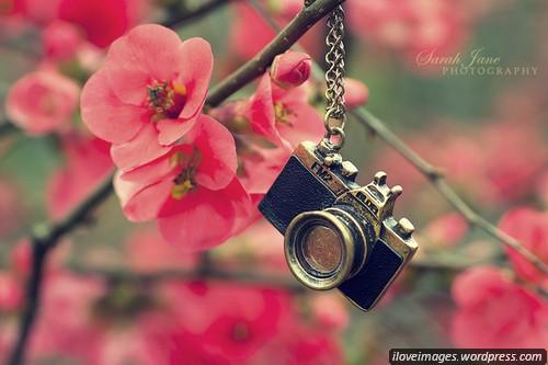 Facebook Cute Girl Wallpaper Cute Flowers Ilove Images
