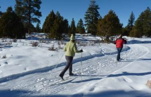 Cross-Country-Skiing-P1020701