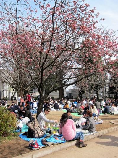 What a Sakura party!