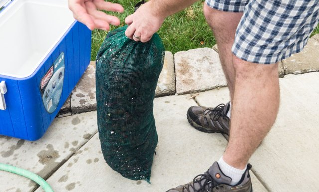 Large sack of live crawfish being opened