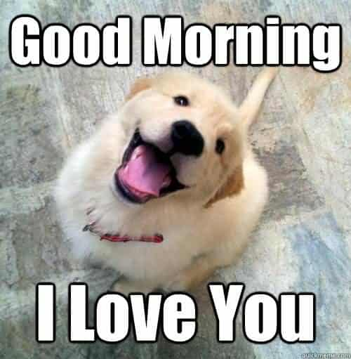 Good morning i love you Love Meme?ssl=1 good morning i love you love meme ilove messages