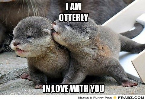Funny Goodnight Memes For Him : Funny i love you memes for him and her ilove messages