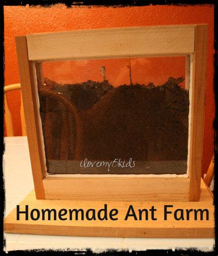 Amazing Ant Farm