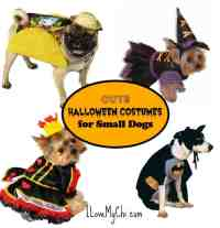Cute Halloween Costumes for Small Dogs | I Love My Chi