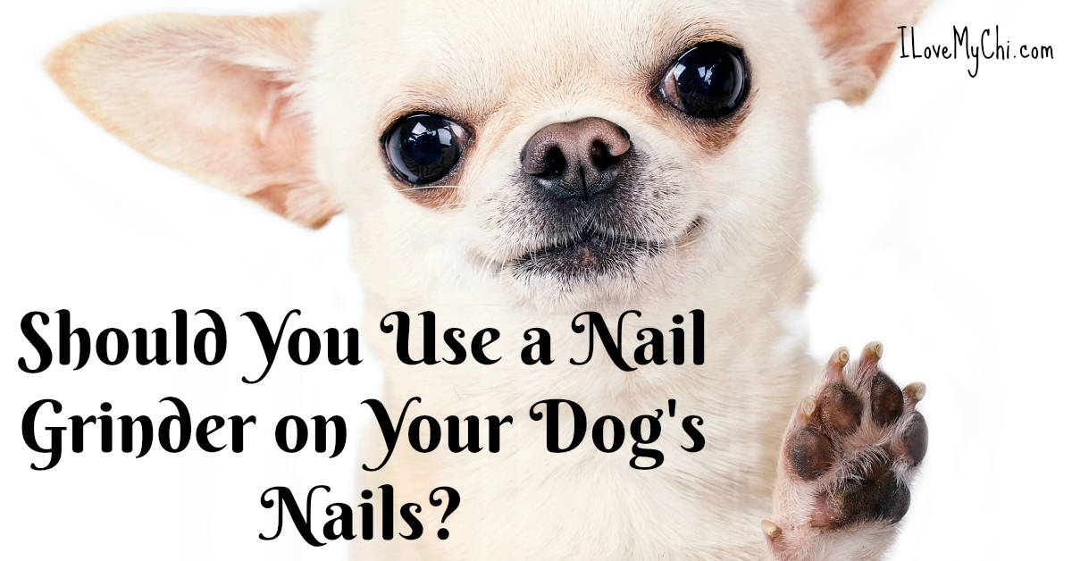 nail grinder dogs
