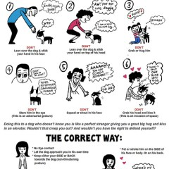 How To Respect A Dog's Space