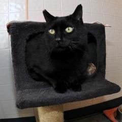 Edie's – Ontario SPCA's Pet of the Week