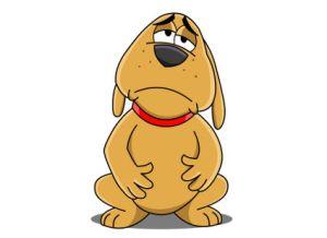 upset stomach dog