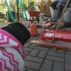 Renovations with Pets – Week 4