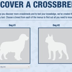 Discovering Crossbreed Dogs