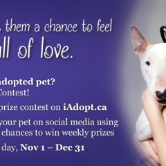 iAdopt for the Holidays – Ontario SPCA