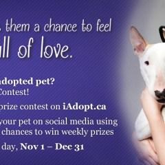 iAdopt for the Holidays – Ontario SPCA
