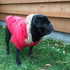 Stay Warm and Look Fashionable with #NorthFetch Athletic Dog Jackets