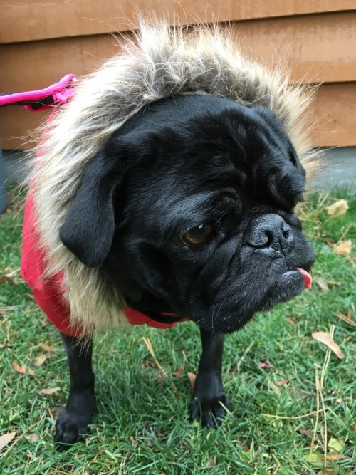 #NorthFetch Athletic Dog Jacket #sponsored