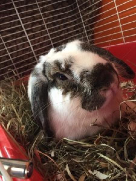 Edie's Pet of the Week - Ontario SPCA