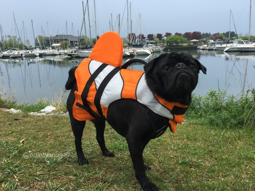 Dog Days of Summer Safety - Water Safety