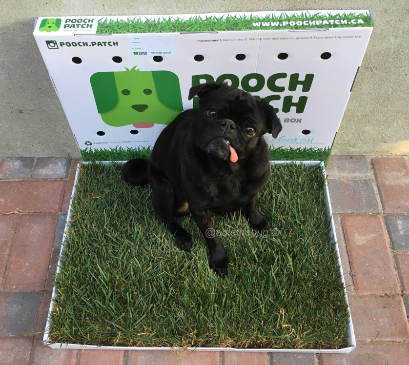 Pooch Patch Review #sp