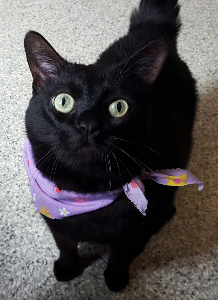 Ontario SPCA's Adoptable Pet of the Week