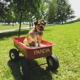 Dog Rescue – Panda's Story