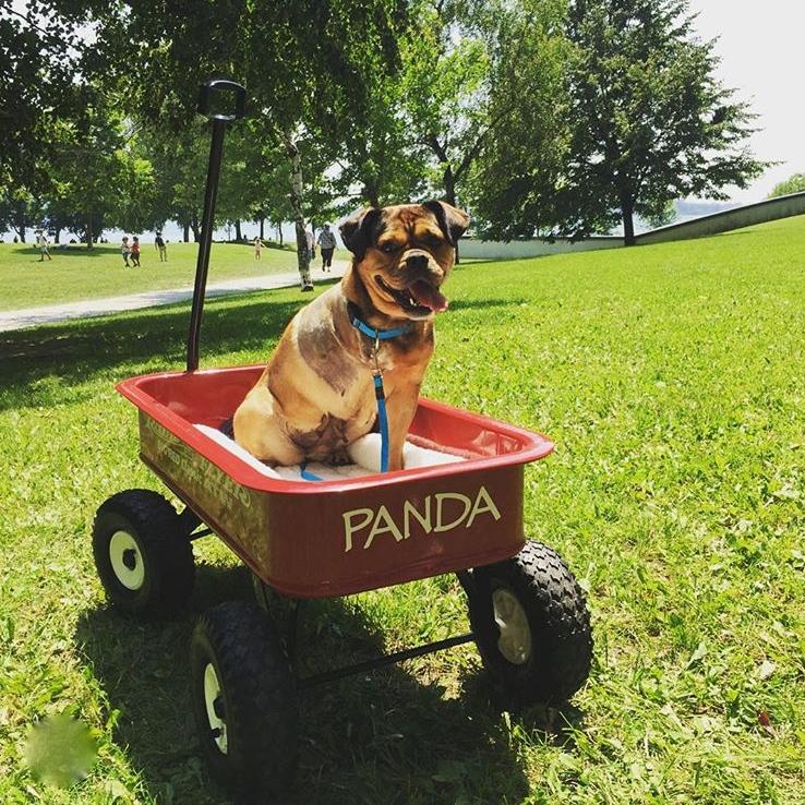 Dog Rescue Stories - Panda