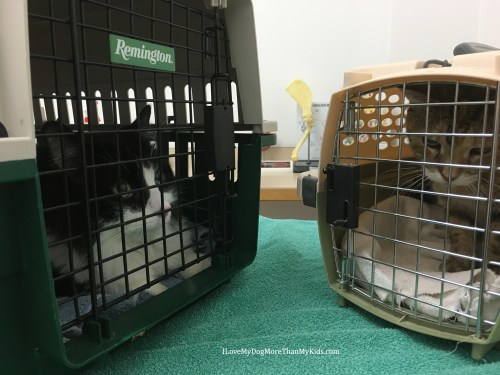 Cats - They Can Love Going to the Veterinarian!