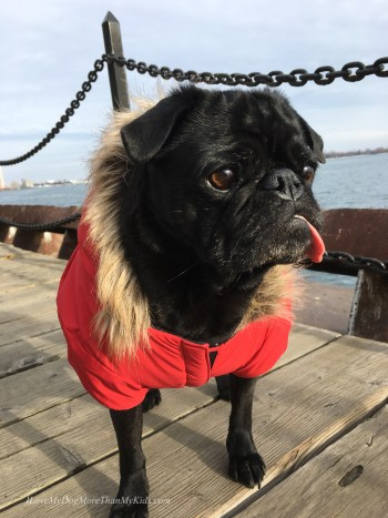 Things My Pug Has Taught Me