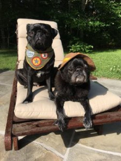 Interviews From Edie's Pug House - Hamilton Pug