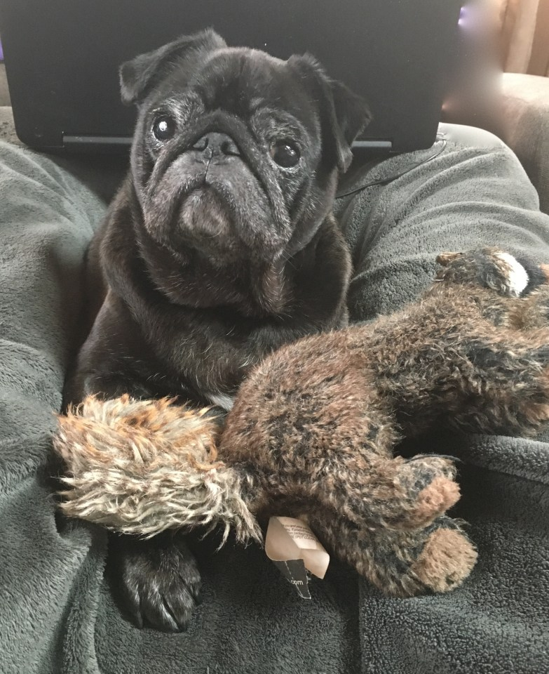 Interviews From Edie's Pug House - Kirby Pug