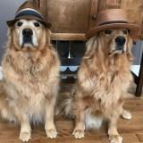Interviews From Edie's Pug House – Finnegan & Seamus
