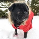 Dog Clothing – Fashion Statement or Necessity?