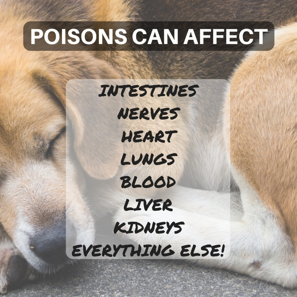 Common Poisoning Symptoms in Dogs