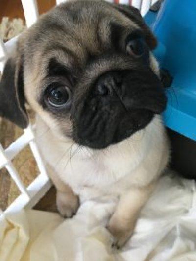Puppy House Training - I'm Not the Puppy Potty Whisperer
