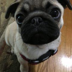 Puppy House Training – I'm Not the Potty Whisperer