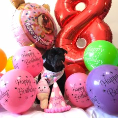 Happy 8th Birthday Edie the Pug