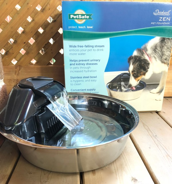Staying Hydrated with PetSafe's Drinkwell Zen Pet Fountain #ad