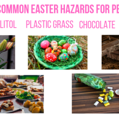 5 Common Easter Hazards for Pets