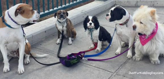 Tips for Choosing A Dog Daycare Facility