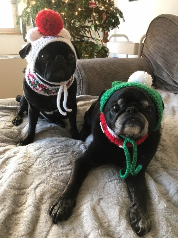 ARF SCARF - Custom Scarfs & Hats Supporting Pug Rescue Since 2014