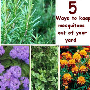 how to keep mosquitoes out of your yard