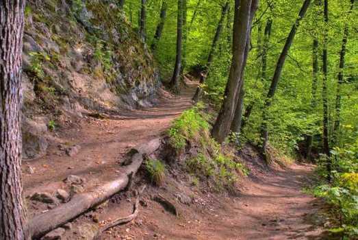 homeschool hiking trail