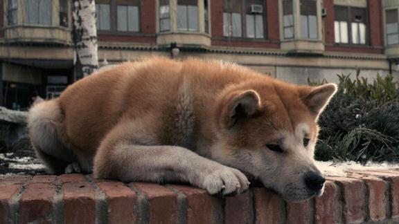 Hachi dog