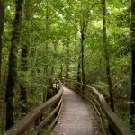 Congaree NP boardwalk