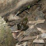 Congaree NP frog