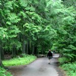 Glacier NP Trail of Cedars